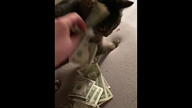 Stripper rubs money on pussy